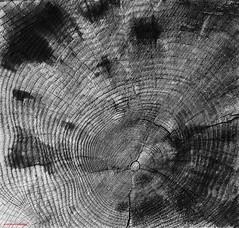 Al ritmo de tus das, al flujo de tu tiempo (Aviones Plateados) Tags: blackandwhite tree blancoynegro canon arbol rebel time circles cosas que days dias tiempo circulos manologarca pasan elltimodelafila t2i quimiportet lamanoamiga astronomiarazonable eos550d kissx4