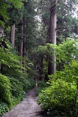 Hakone - Il sentiero dei cedri (*maya*) Tags: wood trees japan alberi forest strada path cedar sentiero hakone giappone cedars foresta hakonemachi cedro cedaravenue cedri oldtokaidoroad ancientcedarspath