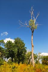 Tree in Yellow Field (tommyr68) Tags: trees tree oklahoma nature forest nikon d60 keystonelake nikond60 mannford