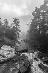 Foggy day, Cauterets (monchoparis) Tags: france fog canon eos francia niebla brouillard pyrenees pirineos cauterets midipyrnes hautespyrnes canon1