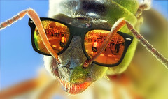 Reflections (kunstschieter) Tags: macro reflection sunglasses insect rotterdam blaak marathon ant runners cubichouses blaaksebos