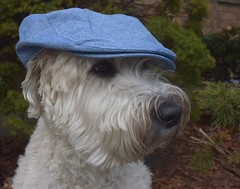 Maggiemae's new hat (Eric.Ray) Tags: dog pet animal portrait hat outdoors