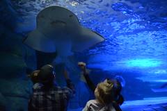 Newport Aquarium (Professor Massa) Tags: newportaquarium leefamily