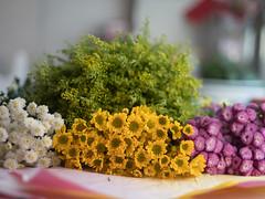 GFX 50S + Mamiya 80mm f1.9 (guavafred0823) Tags: fujifilm gfx 50s mamiya 80mm f19 n flower