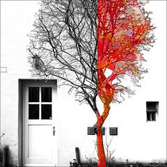 half and half II (j.p.yef) Tags: peterfey jpyef yef digitalart tree house door bw red