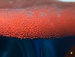 "Macro Monday ""Orange and Blue"" (Argentarius85) Tags: sigma105mm28 macromondays orangeandblue"