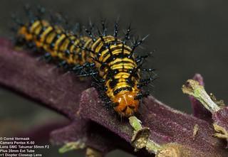 2017-03-26 Caterpillar 4572