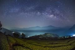 武界~茶園銀河~  Milkyway above Tea farm (Shang-fu Dai) Tags: 台灣 taiwan 南投 武界 nikon d800e tokinadx1017mm sky landscape formosa nantou galaxy 銀河 星空 milkyway 戶外
