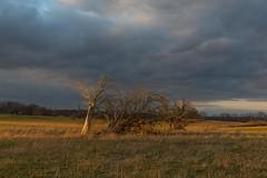 Directional Light (SaunTek) Tags: sunset light directional