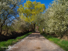 Es grünt .............. (Seppelche) Tags: pfalz feldweg frühling weide erpolzheim albertgraben landschaft pfad