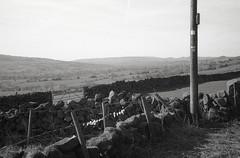 sheep country (OhDark30) Tags: olympus 35rc 35 rc film 35mm monochrome bw blackandwhite fomapan 200 rodinal bwfp countryside country dry stone wall fields wool fence staffordshire staffs churnetvalley hill hillside