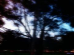 ¿Te acuerdas? (I.Mónica del P) Tags: tarde horaazul blurmotion manipulaciónartistica arbol outfocus movimiento