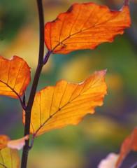 Autumn leaves, autumn colours (mpp26) Tags: autumn leaves colours catchy