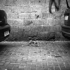 Street life (heshaaam) Tags: cars wall bahrain alley kitten decay muharraq urbex muharraqgovernorate