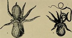 Anglų lietuvių žodynas. Žodis scented wattle reiškia kvapus akacijų lietuviškai.