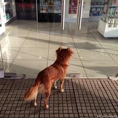 El perrito que espera (RiveraNotario) Tags: dogs perros