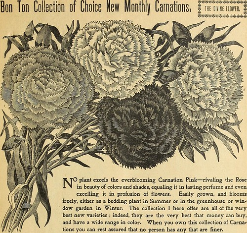 """Image from page 10 of """"Miss Ella V. Baines, the woman florist, Springfield, Ohio : 1900 spring catalogue"""" (1900)"""