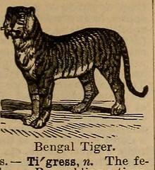 Anglų lietuvių žodynas. Žodis tigrish reiškia a = tigerish lietuviškai.