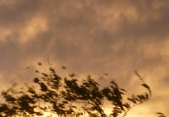 (Flor Benitez :)) Tags: sky arbol cielo nube ramas airelibre