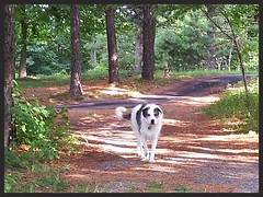 met a doggy (stansvisions) Tags: mountains cute dogs golf fun canine friendly meet aftonva stansvisions