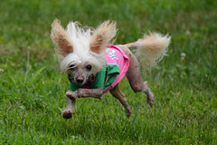 """LuLu Is Literally FLYING • <a style=""""font-size:0.8em;"""" href=""""http://www.flickr.com/photos/96196263@N07/14880422874/"""" target=""""_blank"""">View on Flickr</a>"""