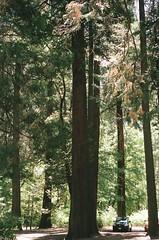 (spitting venom) Tags: trees film nature car vertical forest landscape nikon yosemite yosemitenationalpark nationalparks sierranevadas nikonfm