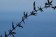 like a painting - Sony RX100 (thanasispap20) Tags: blue sea summer painting greek leaf branch sony greece 100 rx dscrx100
