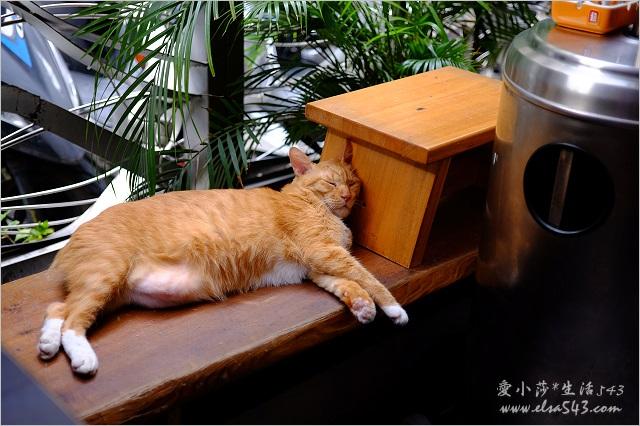 台北旅遊。推薦台北有貓咪的咖啡館【貓奴天堂】貓咪坐檯當店長,台北咖啡館/餐廳有貓咪