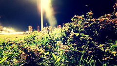 Moar Nature (Cristian M. Tello) Tags: chile city blur macro nature grass night point landscape lights la view special serena 13 something 2014 defocus