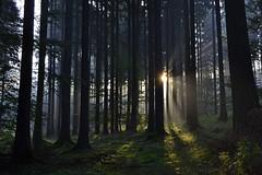 _DSC3990 ein neuer Tag erwacht - awakens a new day 2 (baerli08ww) Tags: light mist tree colors fog forest germany landscape deutschland licht nebel natur landschaft wald baum farben morningsun rheinlandpfalz morgensonne westerwald rhinelandpalatinate westerforest