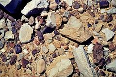 Didymaotus prismaticus (Aizoaceae) W. Barthlott, Lotus-Salvinia.de, (Ceres Karoo, 82, Süd-Afrika)