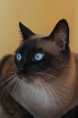 En Pitu (Albert T M) Tags: cats gato gat