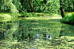 t paisible (LPMarien) Tags: summer green nature leaves river pond quiet peaceful vert rivire reflet qubec zen t reflexion parc feuilles quietness tang tranquille paisible quitude plnitude domainemaizerets pentaxk50