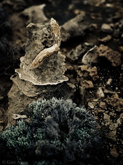 "petrified tree and vine root • <a style=""font-size:0.8em;"" href=""http://www.flickr.com/photos/44919156@N00/15357290916/"" target=""_blank"">View on Flickr</a>"