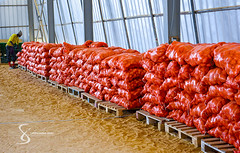 """Bags of potatoes 