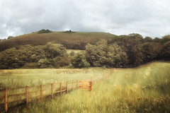 rural dorset scene