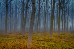 Secreto (AvideCai) Tags: avidecai paisaje arboles bosque niebla sigma 1020 sigma1020
