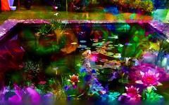 Twilight on the Lily Pond (abstractartangel77) Tags: walledgarden twilight water lilypond prestonmanorbrighton