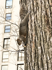 IMG_0384-1 (janneruizzaviasky) Tags: newyork pets novayork centralpark funny cute esquilo squirrel
