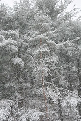 It's BAaack! (eyriel) Tags: tree winter snow snowing cold snowcovered nature