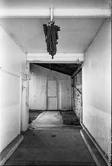 Chaine. (renphotographie) Tags: argentique film35mm noiretblanc vide chaine monochrome olympusxa berggerpanchro400 fougères renphotgraphie
