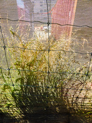 Grass Skirts (Steve Taylor (Photography)) Tags: grass netting container fence wire newzealand nz southisland canterbury christchurch cbd city perspective distorted