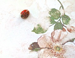 A Ladybug on My Window Sill - (IRENE - Welcome to Spring) Tags: ladybug decorations allladybugs bugs redbugs allbugs nature wonderfulnature beautifulnature indoor indoors indoorscenes window windows windowsills windowframes artwork floral livebugs liveladybugs spring artobjects designs