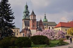 Wawel Hill (edgardwahrhaft) Tags: wawel hill royal castle nature flowers poland krakow nikon d750 nikkor af 50mm f 18 d