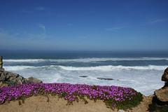 Guincho (hans pohl) Tags: portugal lisbonne atlantique océan vagues waves landscapes beaches plages flowers fleurs