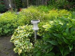 Tuin_Juni_20140608_6 (Michel Fermans) Tags: lamp solar tuin hosta rudbeckia 2014 zonnehoed zonneenergie tuinlamp