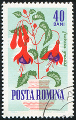 Romania 0572 m (roook76) Tags: old plant flower nature floral beautiful beauty vintage botanical stem ancient flora message mail natural blossom antique postcard fuchsia historic retro stamp petal seal romania envelope bloom letter florist aged botany postage 1964 postmark philately