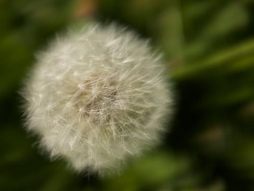 Make a wish /  ©  Still ePsiLoN