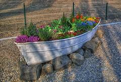 Planter-old boat_Pinterest (DougBittinger) Tags: