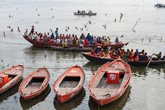 Boats and birds (Dick Verton ( more than 13.000.000 visitors )) Tags: travel people india birds river asia varanasi ganges pilgrims dickverton
